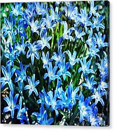 Blue Glory Snow Flowers  Acrylic Print by Judy Palkimas
