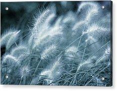 Blue Gras Acrylic Print