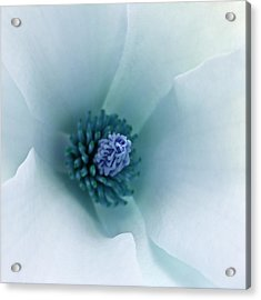 Acrylic Print featuring the photograph Abstract Blue Green White Flowers Macro Photography Art Work by Artecco Fine Art Photography