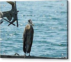 Blue Heron #1 Acrylic Print