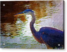 Acrylic Print featuring the photograph Blue Heron 2 by Donna Bentley