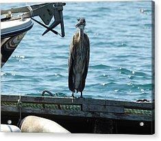 Blue Heron #2 Acrylic Print