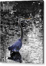 Blue Heron 2008 Acrylic Print by Joseph Duba