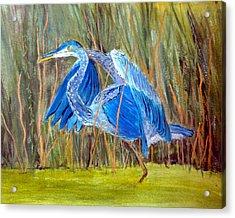 Blue Heron In Viera  Florida Acrylic Print