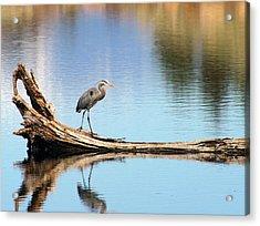 Blue Heron At Lake Shastina Acrylic Print by Jim Nelson