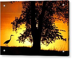 Blue Heron At Sunrise Acrylic Print