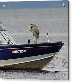 Blue Heron Boat Ride Acrylic Print