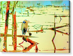 Acrylic Print featuring the photograph Blue Heron by Dale Stillman