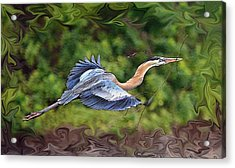 Acrylic Print featuring the photograph Blue Heron Flight by Shari Jardina