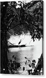 Blue Heron In Black And White. Acrylic Print
