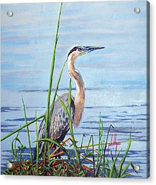 Acrylic Print featuring the painting Blue Heron by Jim Phillips