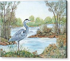 Blue Heron Of The Marshlands Acrylic Print