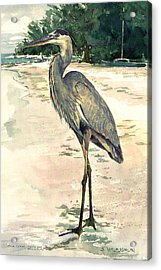 Blue Heron On Shell Beach Acrylic Print by Shawn McLoughlin