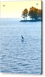 Blue Heron On The Chesapeake Acrylic Print by Bill Cannon