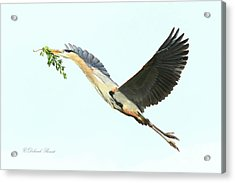 Acrylic Print featuring the photograph Blue Heron Series Twig 2017 by Deborah Benoit