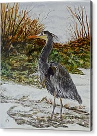 Acrylic Print featuring the painting Blue Heron by Sher Nasser