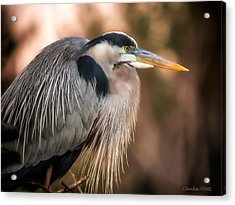 Acrylic Print featuring the photograph Blue Heron Thinking by Claudia Abbott
