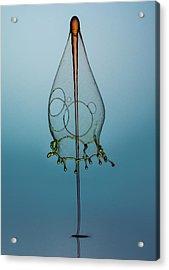 Blue Hood Acrylic Print by Jaroslaw Blaminsky