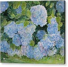 Blue Hydrangea 2 Sold Acrylic Print by Gloria Turner
