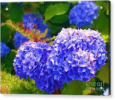 Blue Hydrangea Acrylic Print by Methune Hively
