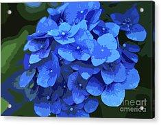 Blue Hydrangea Stylized Acrylic Print by Sharon Talson