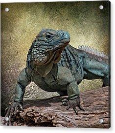 Blue Iguana Acrylic Print