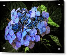 Blue In Nature Acrylic Print