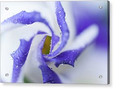 Acrylic Print featuring the photograph Blue Inspiration. Lisianthus Flower Macro by Jenny Rainbow
