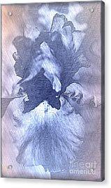 Blue Iris Abstract Acrylic Print