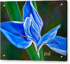 Acrylic Print featuring the painting Blue Iris by Laura Bell