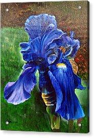 Blue Iris Acrylic Print