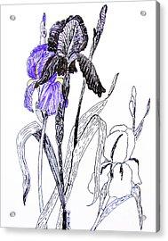 Blue Iris Acrylic Print by Marilyn Smith