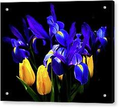 Blue Iris Waltz By Karen Wiles Acrylic Print by Karen Wiles