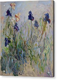 Blue Irises In The Field, Painted In The Open Air  Acrylic Print