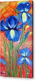 Blue Irises Acrylic Print by Lia  Marsman