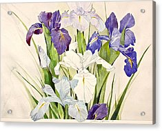 Blue Irises-posthumously Presented Paintings Of Sachi Spohn  Acrylic Print