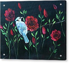 Blue Jay In Rose Bush Acrylic Print