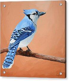 Blue Jay Acrylic Print by Lesley Alexander
