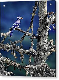 Blue Jay Mountain Acrylic Print