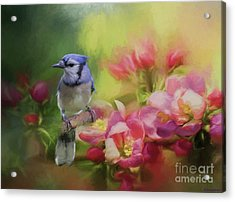 Blue Jay On A Blooming Tree Acrylic Print by Eva Lechner