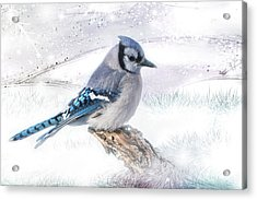 Acrylic Print featuring the photograph Blue Jay Snow by Patti Deters