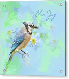 Acrylic Print featuring the photograph Blue Jay Watercolor Photo by Heidi Hermes