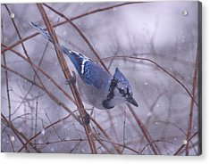 Blue Jay Way Acrylic Print