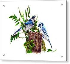 Blue Jays Acrylic Print