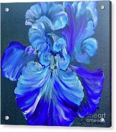 Blue/lavender Iris Acrylic Print