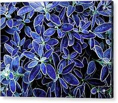Blue Leaves Acrylic Print