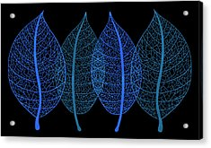 Blue Leaves Acrylic Print by Frank Tschakert