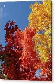 Blue Maple Acrylic Print by The Stone Age