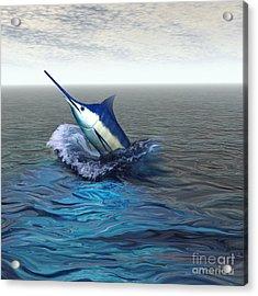 Blue Marlin Acrylic Print by Corey Ford