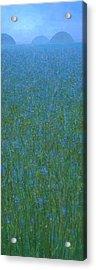 Blue Meadow 1 Acrylic Print